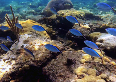 Photo of fish under water by the reef.
